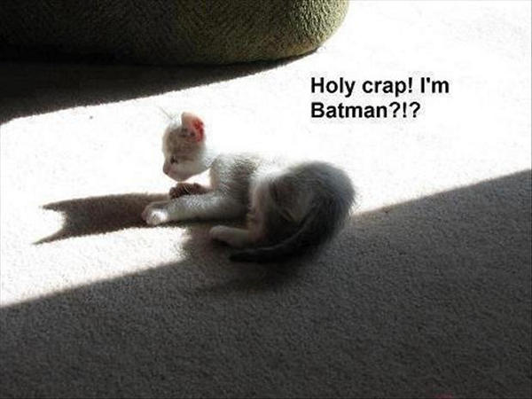 funny-animal-pictures-48