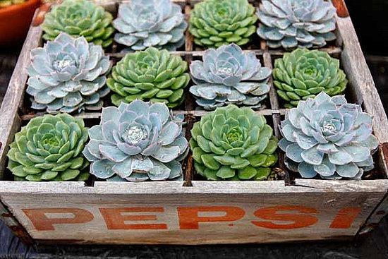 soda crate planter