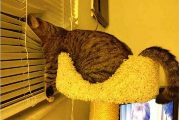 cats-sleeping-awkward-positions-18