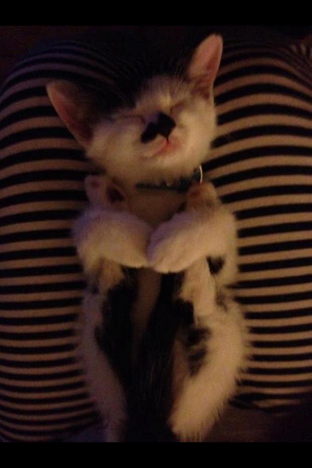 cats-sleeping-awkward-positions-25