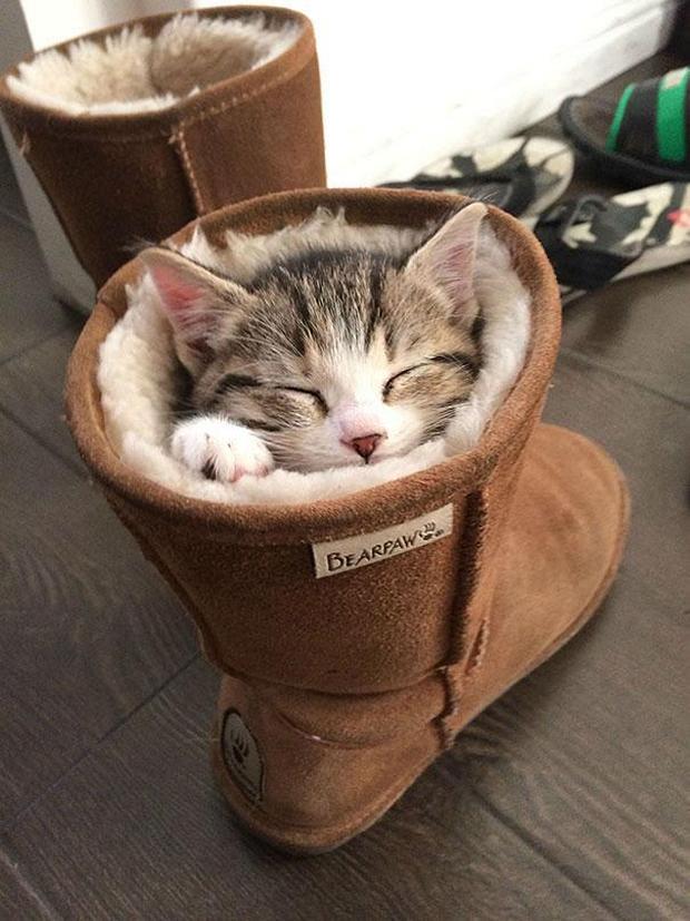 cats-sleeping-awkward-positions-28