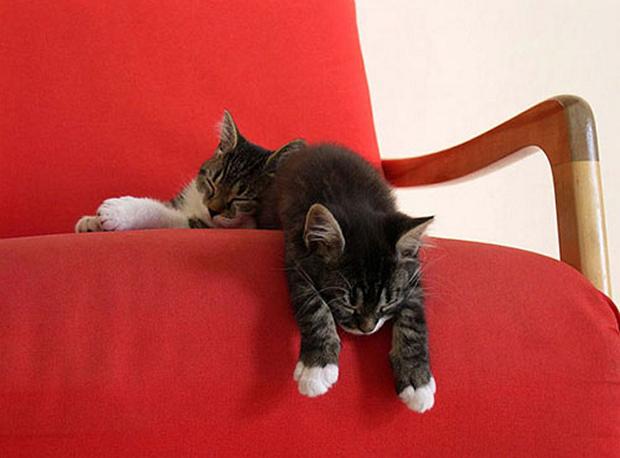 cats-sleeping-awkward-positions-43