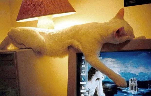 cats-sleeping-awkward-positions-50