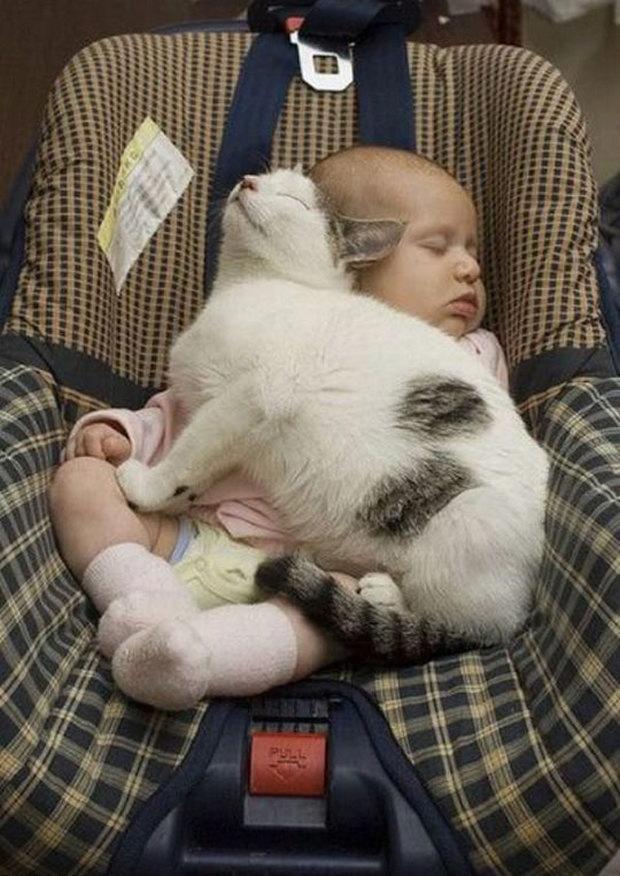 cats-sleeping-awkward-positions-55