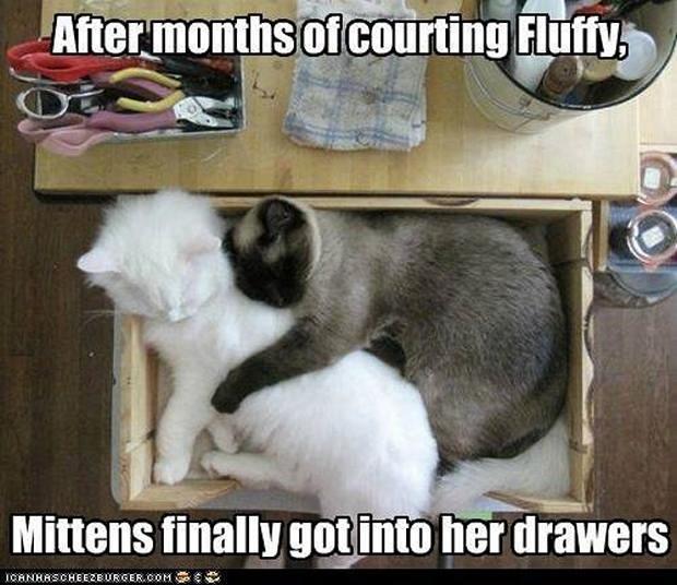cats-sleeping-awkward-positions-9