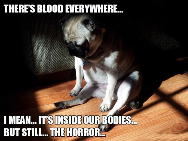 Funny-animal-pics-with-captions2