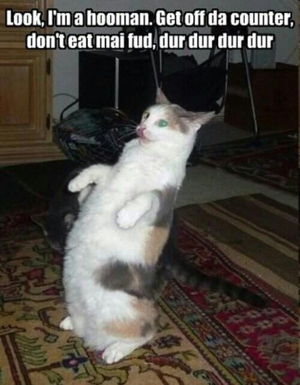 funny-animal-pictures-with-captions-008-016
