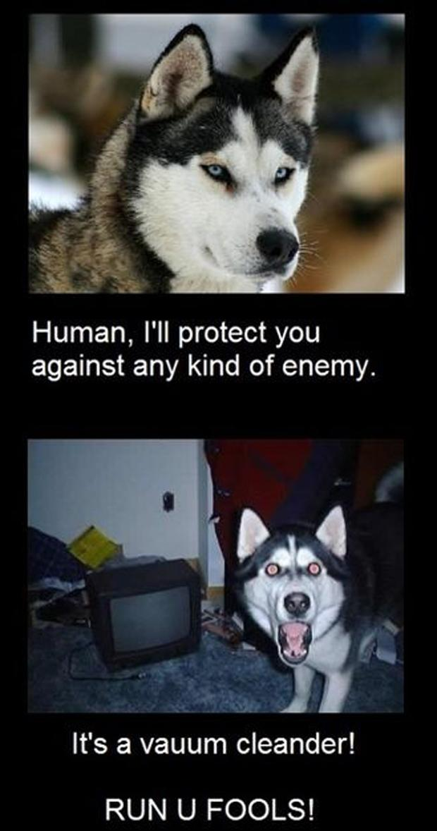 funny-animal-pictures-with-captions-009-010
