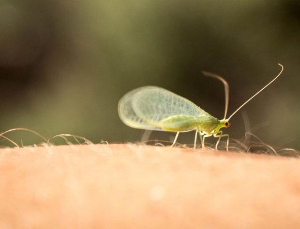 photogenic-bug