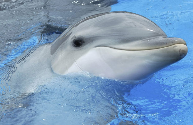 photogenic-dolphin