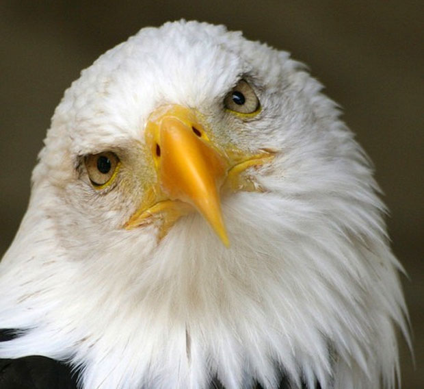 photogenic-eagle
