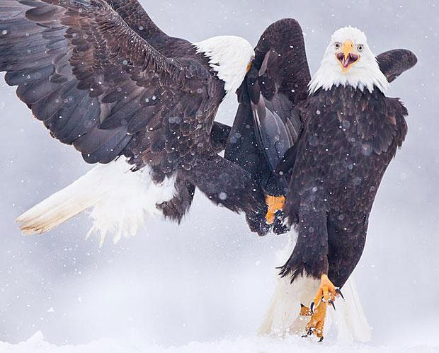 photogenic-eagles