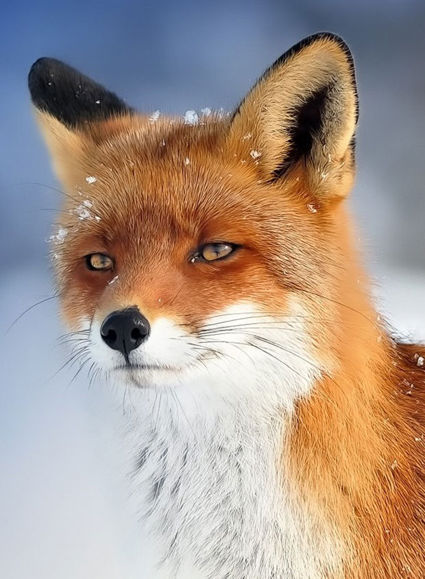photogenic-fox
