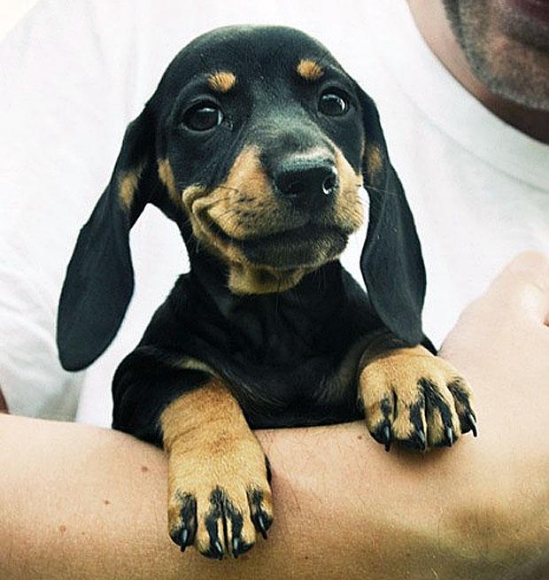 photogenic-little-dog