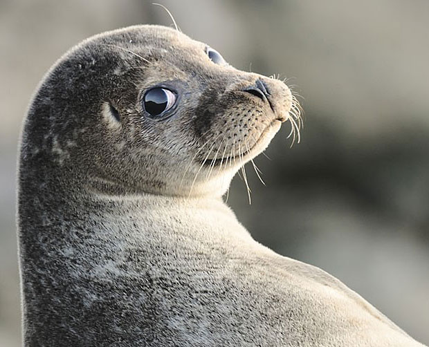 photogenic-seal