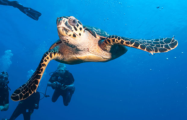 photogenic-seaturtle