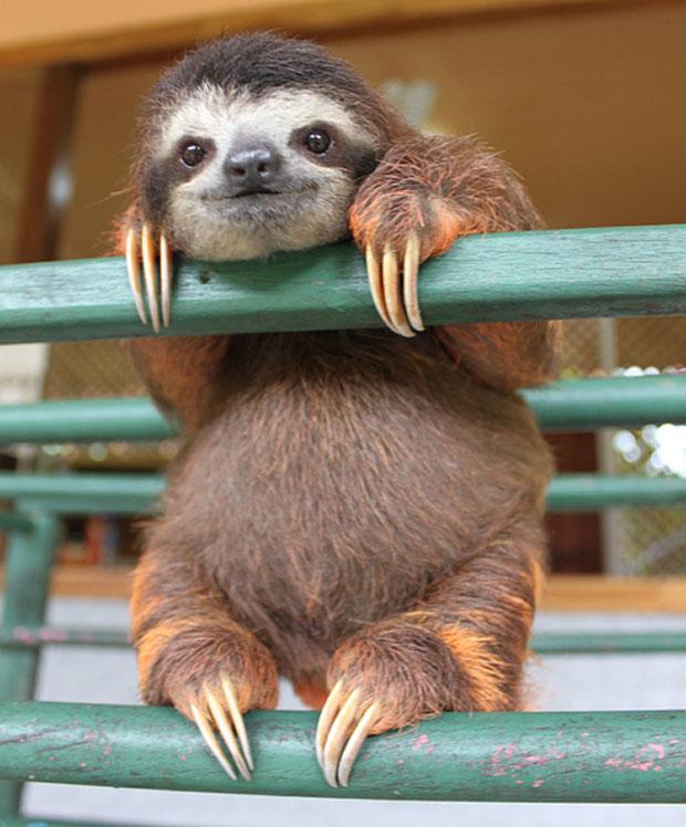 photogenic-sloth