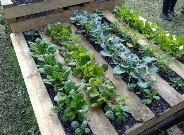 ideas pallets raised garden beds (1)