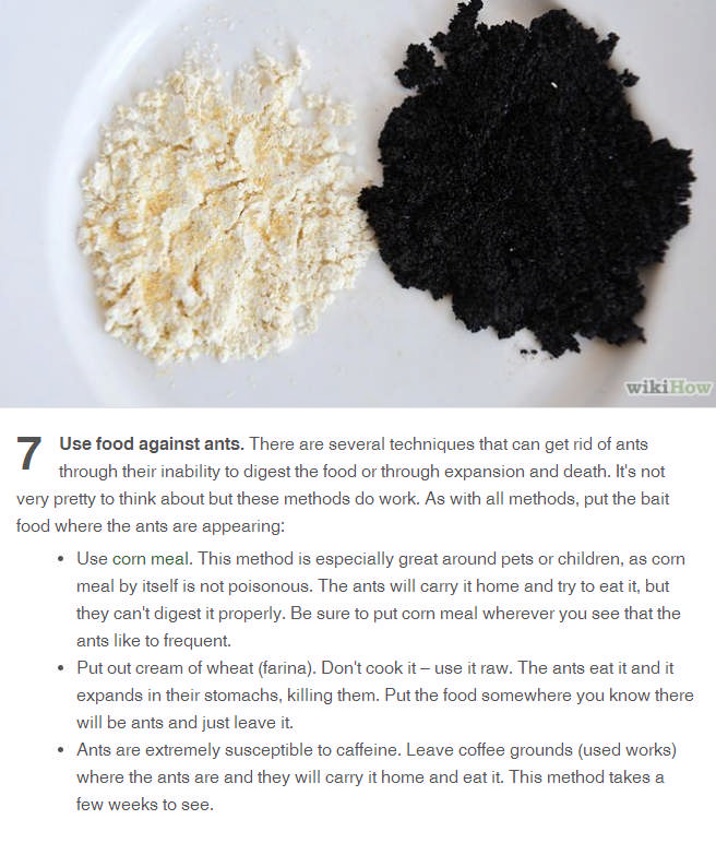 Use food to kill ants