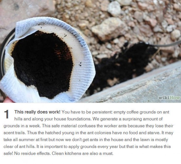 coffee grounds will stop ants