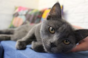Luxury Cat Accommodation Brisbane