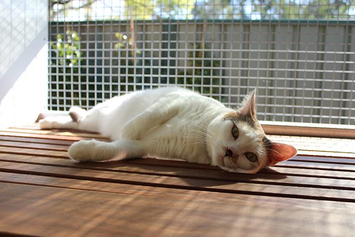 Brisbane Cat Motel