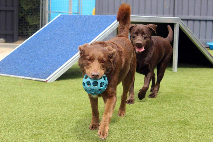 Dog Day Care Brisbane