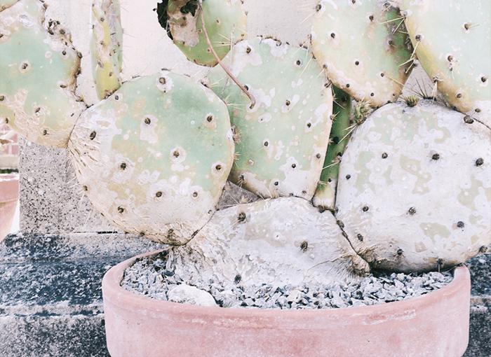 cactus-color-flower-1030966-three-crp-cm