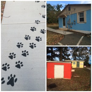 changes at A Better Dog Kennel