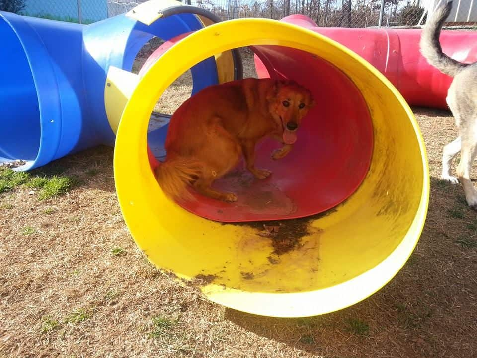 dog day care at better dog kennel - dog in tube