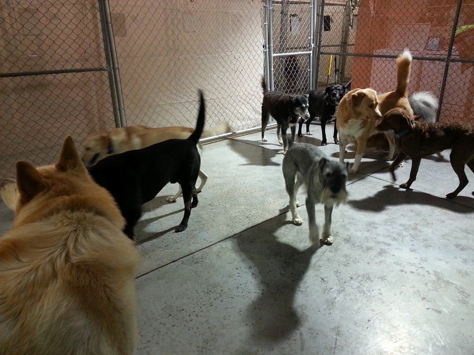 dog day care at better dog kennel - indoor dog day care