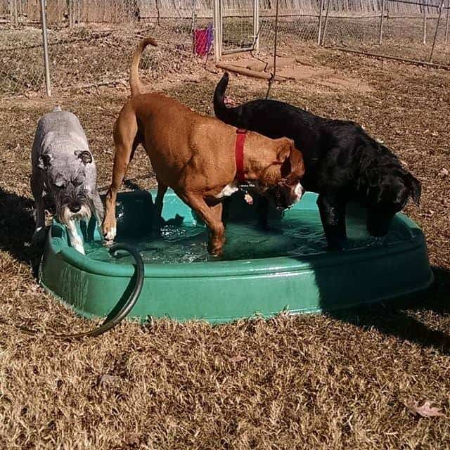 dog day care at better dog kennel