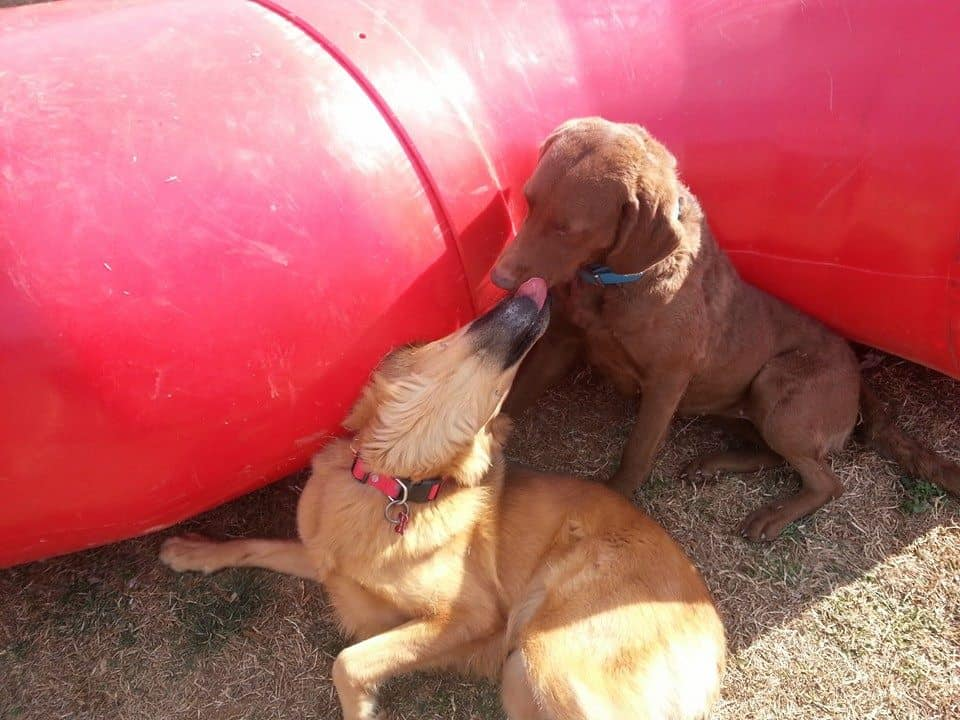 dog day care at better dog kennel - dog kisses