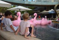 flamingos in the Hornsby Mall fountain