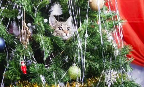 Cat-proof your Christmas tree! by Premier Pet Supply