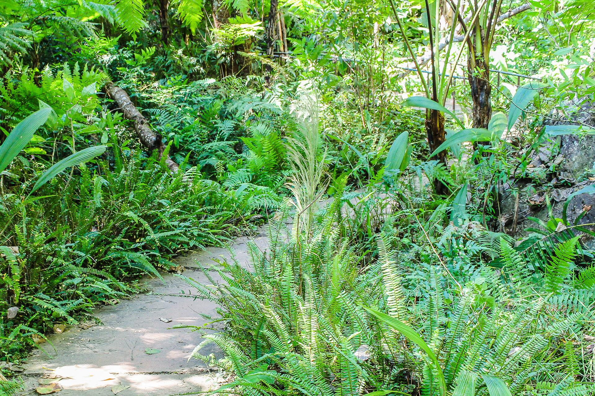 A landscape garden forest style