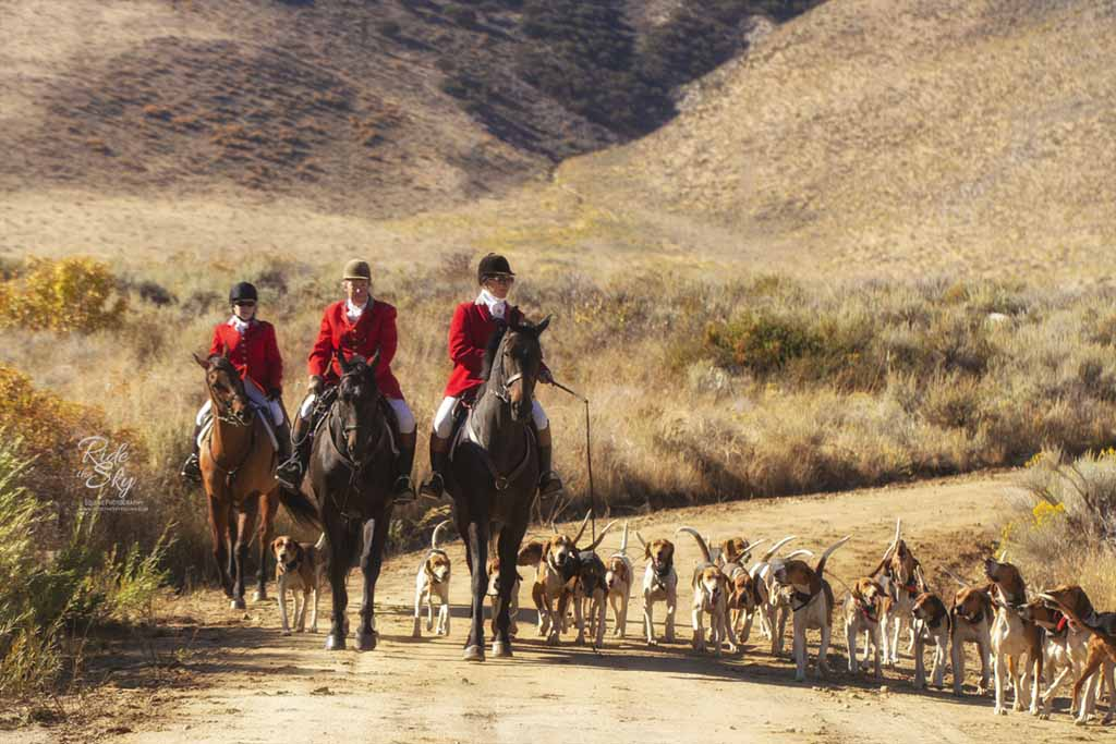 Fox Hunt Photograph of Horses and Hounds in Reno Nevada