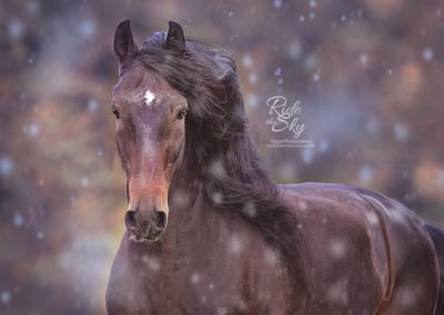 Horse-Picture-Andalusian-Stallion-Chattanooga-Knoxville-Tennessee-RidetheSkyEquine