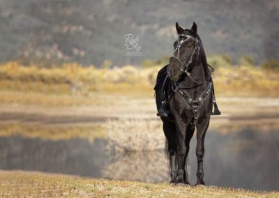 Mustang-Horse-Photography-Chattanooga-Tennessee-RidetheSkyEquine