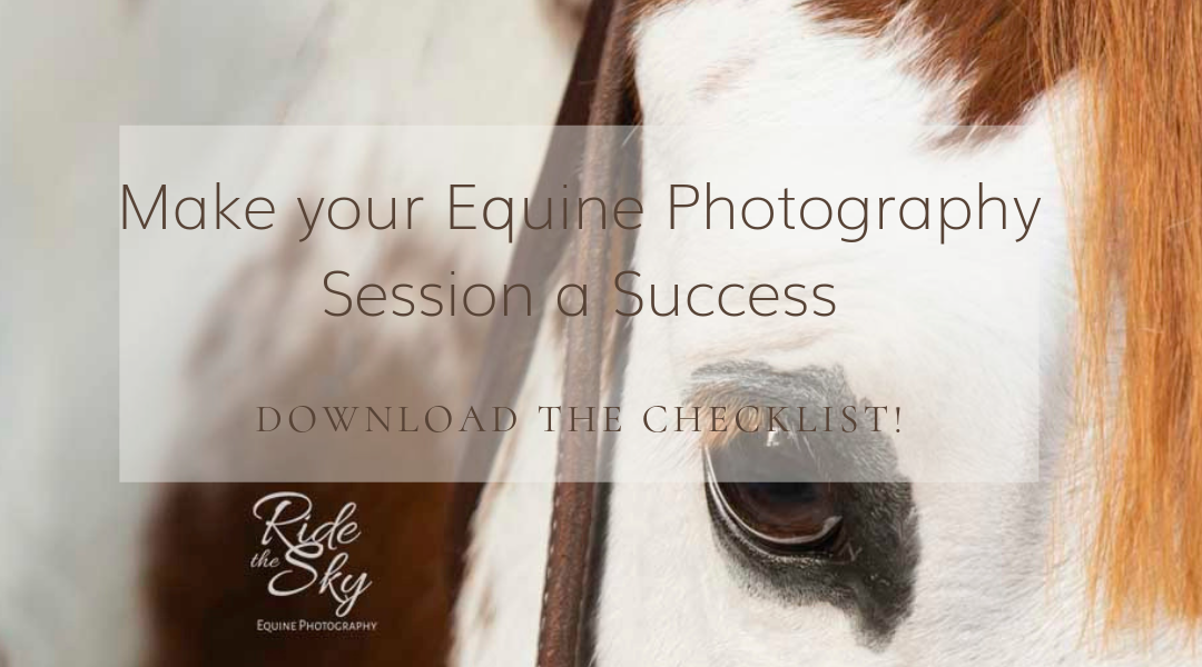 Equine Photography: Tips for Making Your Session A Success