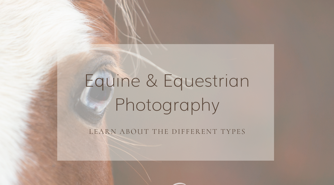 Equine and Equestrian Photography