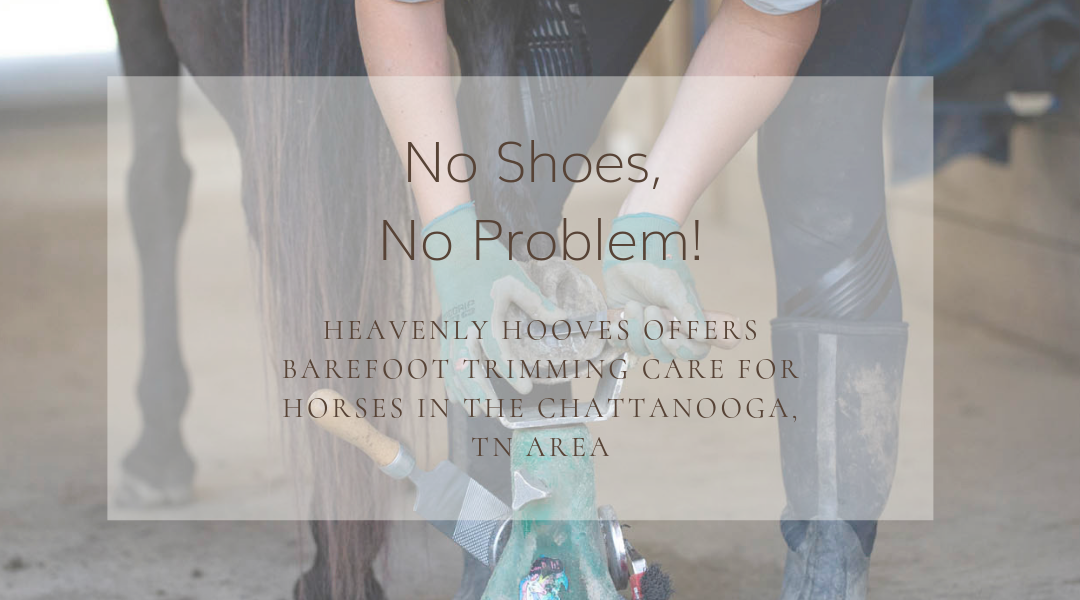 No Shoes, No Problem! Heavenly Hooves offers Barefoot Trimming Care for Horses in the Chattanooga, Tennessee area