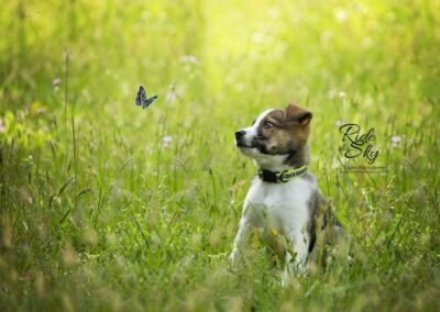 Puppy-Butterfly-Field-Flowers-Tennessee-Chattanooga-RidetheSkyEquine-SM