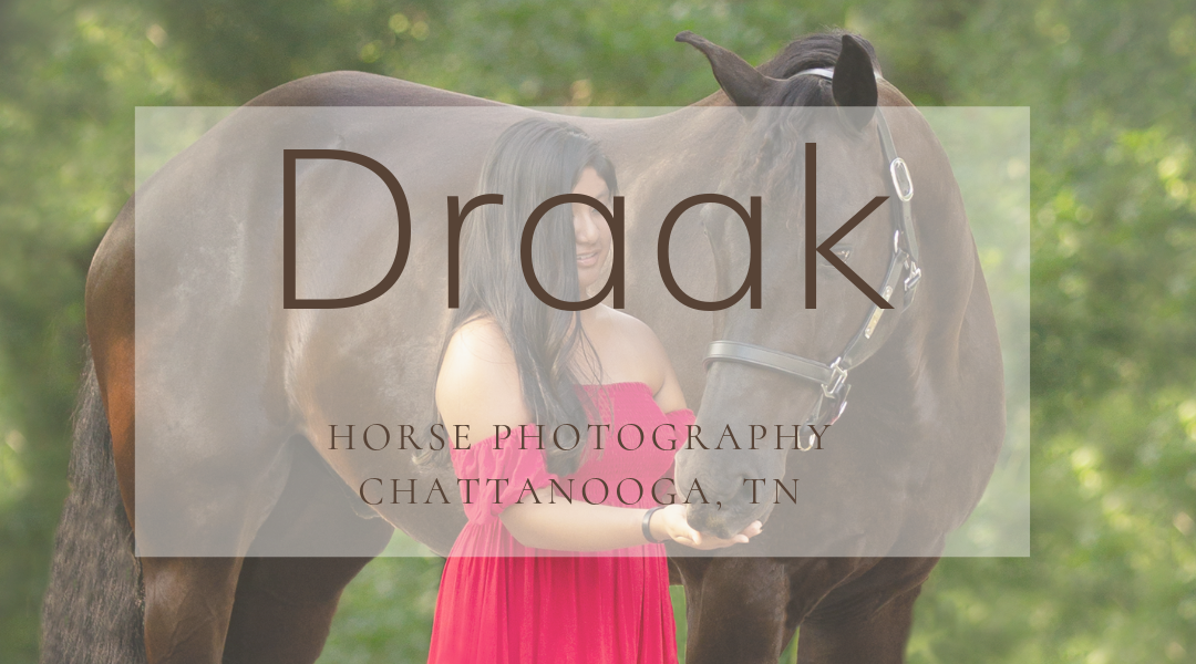 Chattanooga Horse Photography: Angelina & Draak