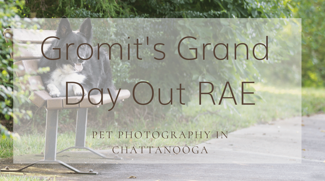 Chattanooga Pet Photographer: Meet Gromit