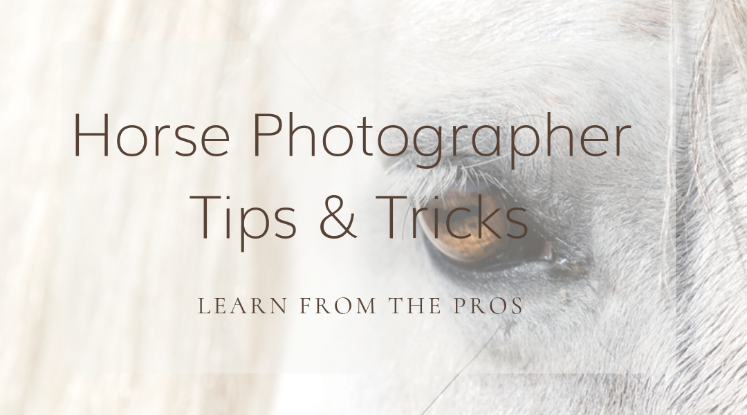 What do you never leave home without as a horse photographer?