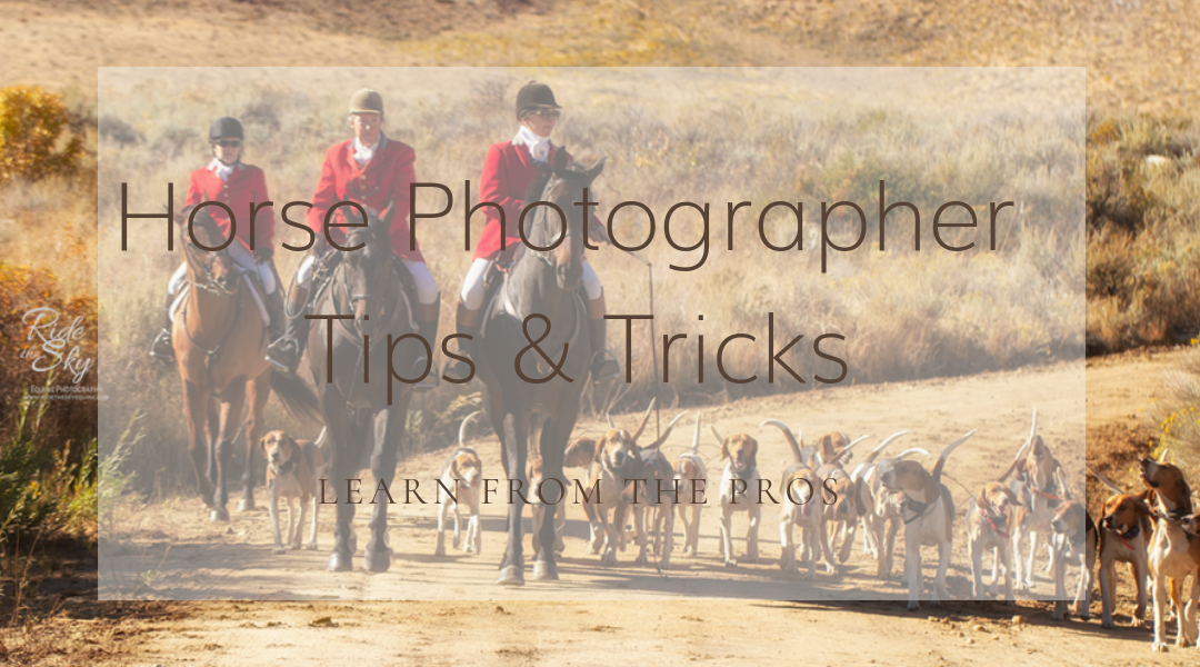 Tips for Aspiring Horse Photographers