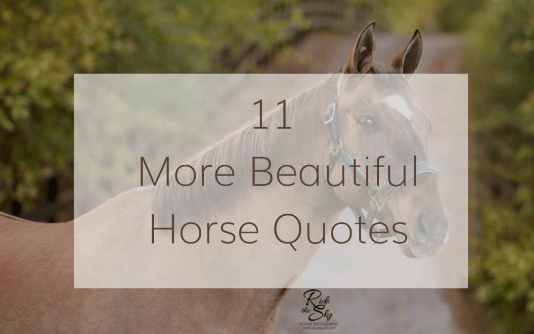 11 More Great Horse Quotes