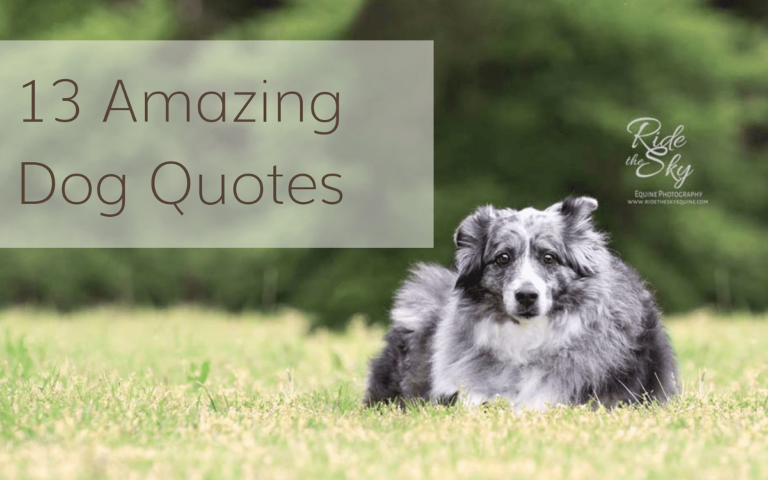 Chattanooga Pet Photography: 13 Amazing Dog Quotes