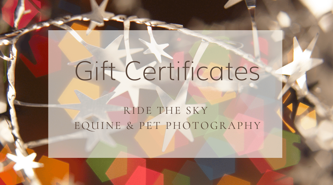 Chattanooga Horse Photography: Gift Certificates